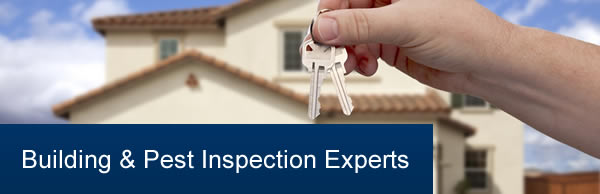 building and pest inspections experts