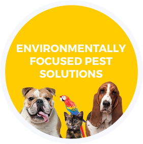 environmentally focused pest solutions