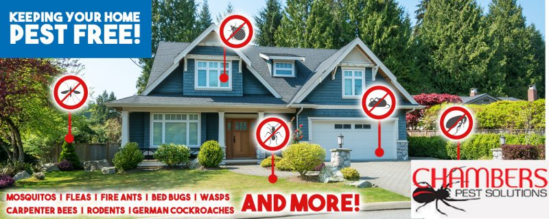 keeping your home pest free!
