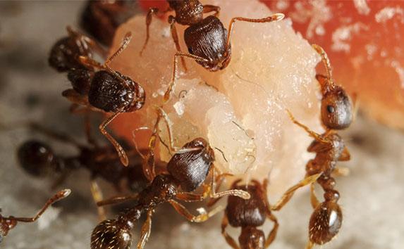 pest inspection services