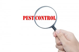 Pest Control Services For Protection Of Your Family And Pricey Objects