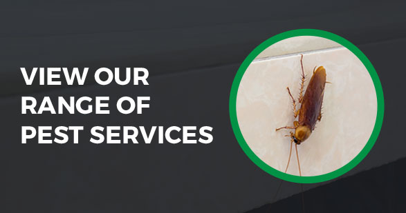 view our range of pest services