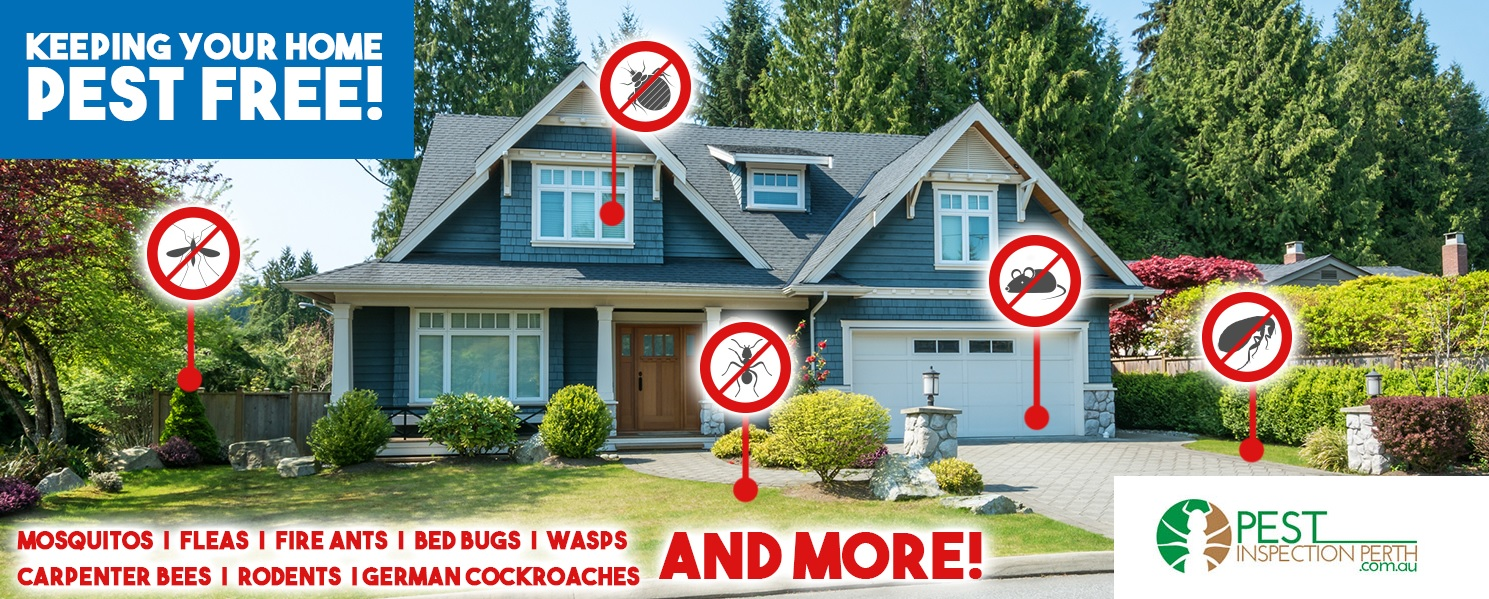 keeping your home pest free